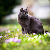 Cute kitty cat outdoors on a green lawn — Stock Photo