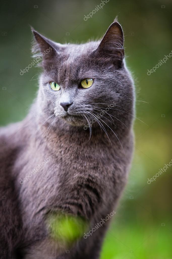 可爱的小猫猫户外
