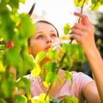 Pretty female gardener taking care of her lovely garden — Stock Photo