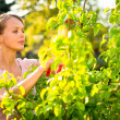 Pretty female gardener taking care of her lovely garden — Stock Photo #29824609