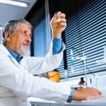 Senior male researcher — Stock Photo #40427829