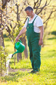 Senior gardener in his garden — Stock Photo