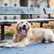 Cute dog waiting — Stock Photo