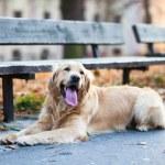 Cute dog waiting — Stock Photo #41960891