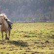 Stock Photo: Horse galloping towards you