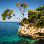 Splendid seacoast of Croatia — Stock Photo