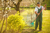 Senior man gardening — Stock Photo