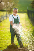 Senior man gardening — Stock Photo