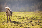Saddled horse galloping — Stock Photo