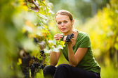 Woman in vineyard picking grape — Stock Photo