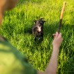 Walking the dog — Stock Photo #50021995