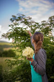 Woman picking elderflower — Stockfoto