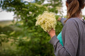 Woman picking elderflower — Стоковое фото