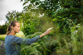 Woman picking elderflower — Stock fotografie