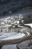 Reis-terrassen in yuanyang, china bei sonnenaufgang — Stockfoto