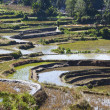 Stock Photo: Rice terraces at day