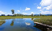 Wetland pond in sunny day — Stock Photo