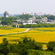 Rural landscape around at Kaiping Diaolou in China, Unesco world — Stock Photo