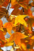 Autumn red leaves — Stock Photo