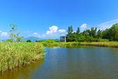 Wetland pond at day in Hong Kong — Stock Photo
