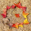 Fallen autumn leaves life cycle — Stock Photo