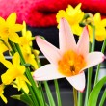 Beautiful spring flowers — Stock Photo #24038861
