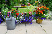 Summer flowers on the patio — Stock Photo