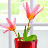 Beautiful Lily flowers — Stock Photo