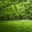 Shady deciduous stand of Bialowieza Forest in springtime — Stock Photo