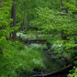 Stock Photo: Small forest river crossing alder forest