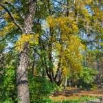 Path in a botanical garden — Stock Photo #31932601