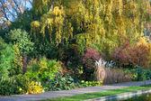 Vegetation in a botanical garden — Stock Photo