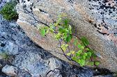 Mosses and stones — Stock Photo