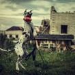 Dog Great Dane in a jump catches a toy - Stock Photo