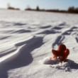 Stock Photo: Little lonely red mstay on snow