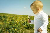 Little boy child with dandelion flower in summer — Stock Photo