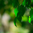 Light shining on tree leaves — Foto Stock