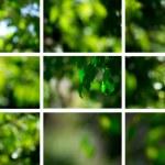 Light shining on tree leaves — Stock Photo
