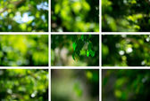 Light shining on tree leaves — Stock Photo