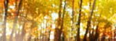Abstract autumn background with bokeh. Colorful banner. Background with place for your text. — Stock Photo