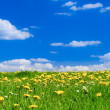 Spring Meadow - Stock Photo