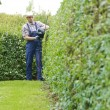 Stock Photo: Gardening, cutting hedge