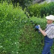 Gardening, cutting hedge - Stock Photo