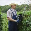 Gardening, cutting hedge — Stock Photo #20429133