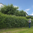 Gardening, cutting hedge — Stock Photo