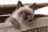 Nosy little cat — Stock Photo