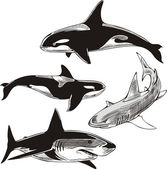 Sharks and killer whales — Stock Vector