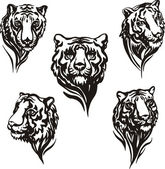 5 tiger heads — Stock Vector
