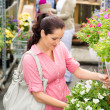 Garden centre woman hold white surfinia flower — Stock Photo