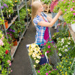 Woman shopping for flowers in garden centre — Stock Photo